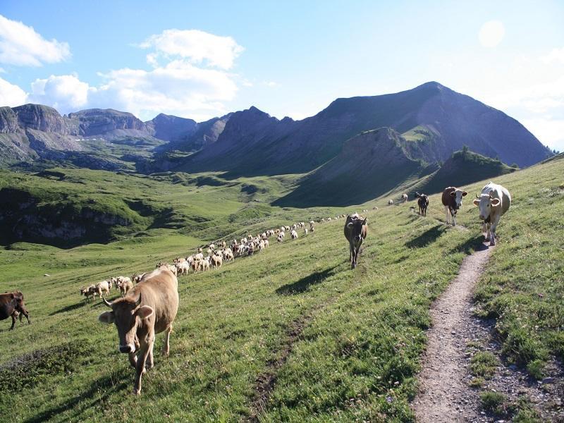 Trentino Natura 2000. La biodiversità intorno a noi